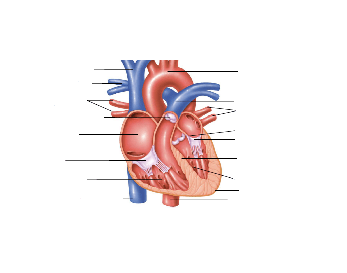 Game statistics frontal cross section of heart diagram purposegames frontal cross section of heart diagram ccuart Choice Image