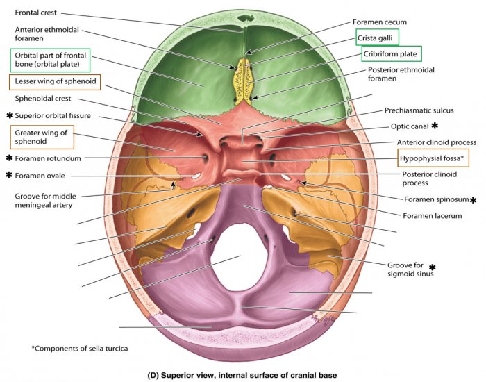 Beautiful Anatomy Of Skull Base Photos Anatomy And Physiology