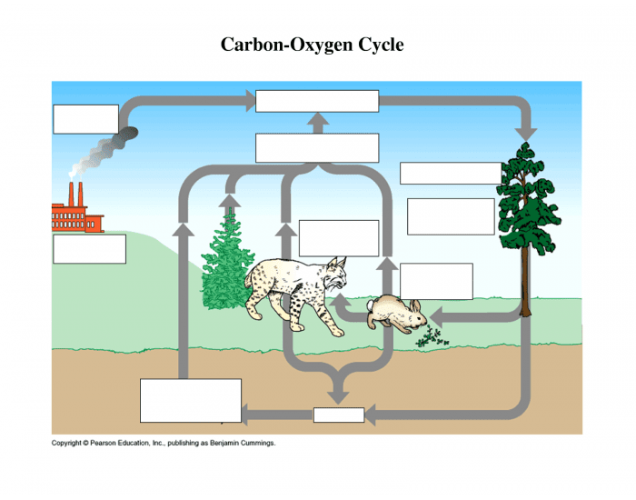 Carbon oxygen diagram electrical work wiring diagram carbon oxygen cycle purposegames rh purposegames com carbon oxygen cycle diagram worksheet carbon dioxide oxygen cycle ccuart Images