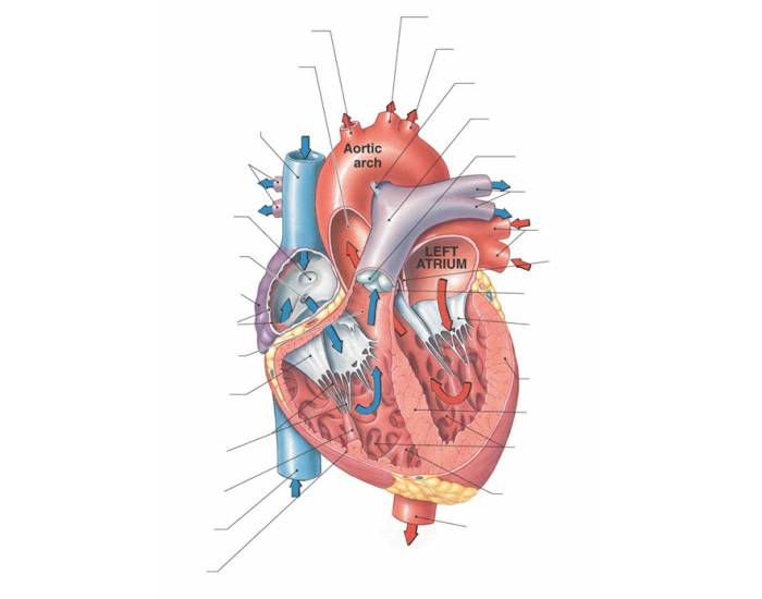 Game Statistics - Anatomy of the Human Heart - Frontal Section ...