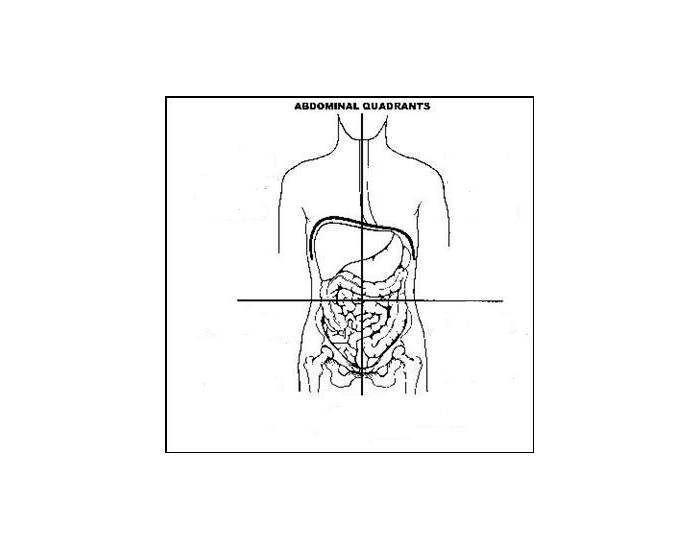 Game statistics abdominal quadrants and their contents purposegames abdominal quadrants and their contents ccuart Image collections
