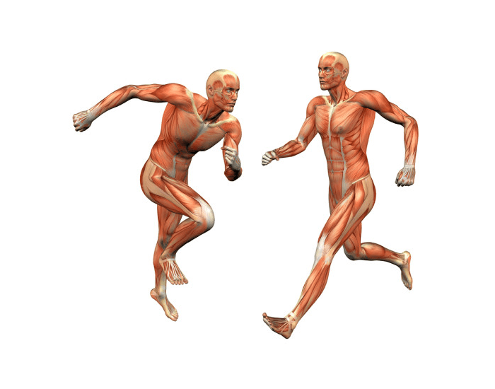 Movements of Specific Muscles