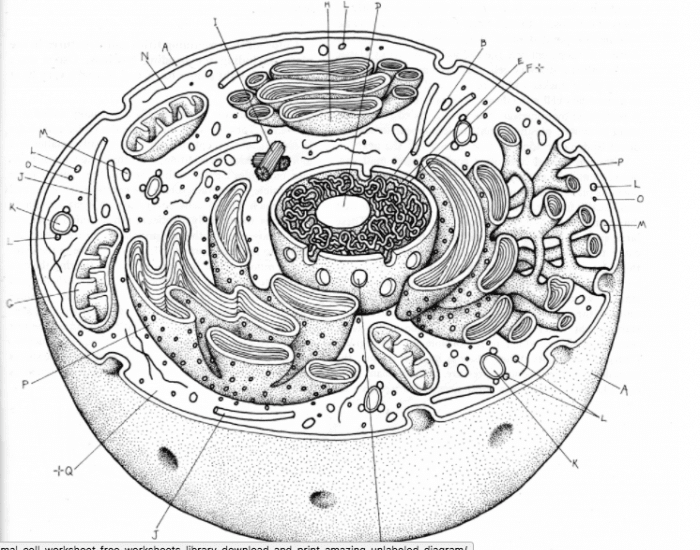 30 Label Of Animal Cell