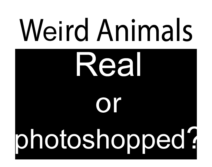 Weird Animals - Real or Photoshopped? Volume 1