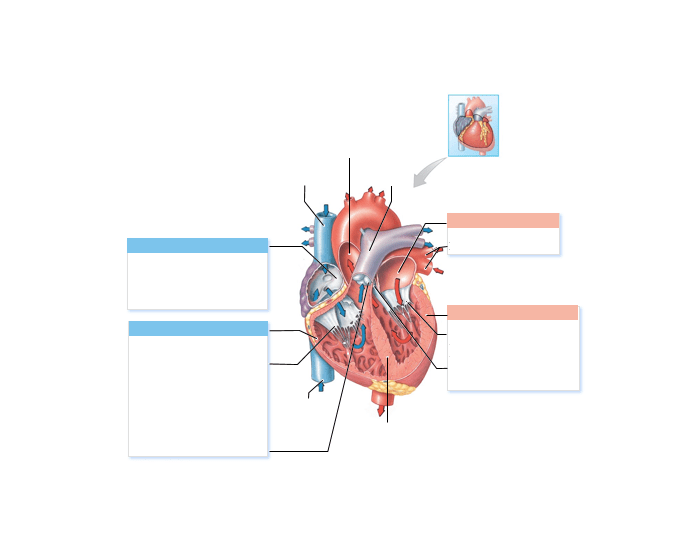 Game Statistics - Sectional Anatomy of the Heart - PurposeGames