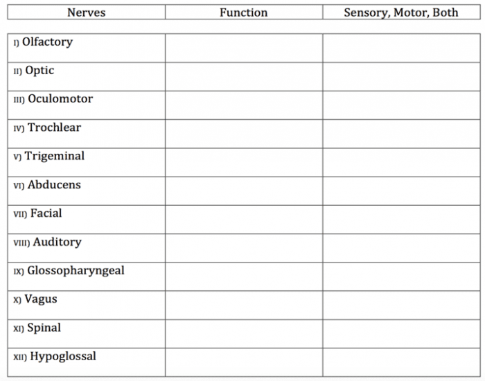 12 Cranial Nerve Functions