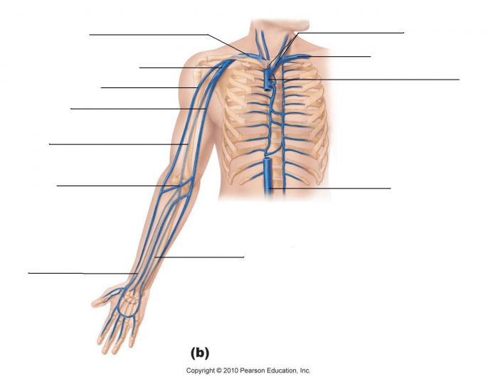Game Statistics Veins Of Arm And Chest Purposegames