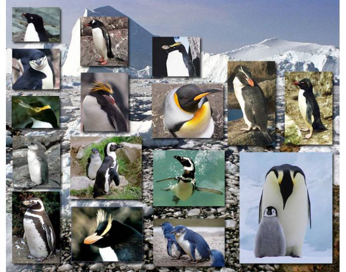 Penguins (Animals Series)
