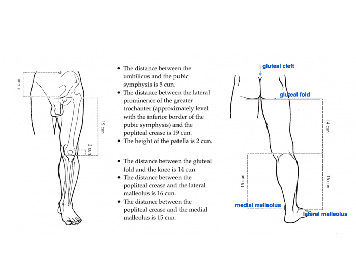 cun measurements of lower body