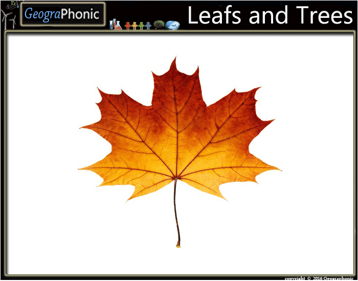 Leafs and Trees Slide Quiz