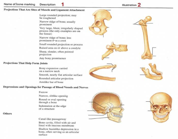 Skeleton Games Anatomy
