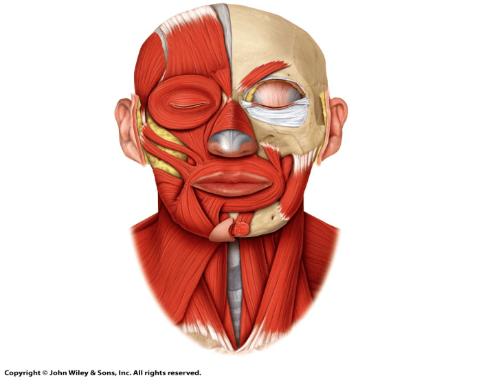 Can you build your facial muscles — photo 14