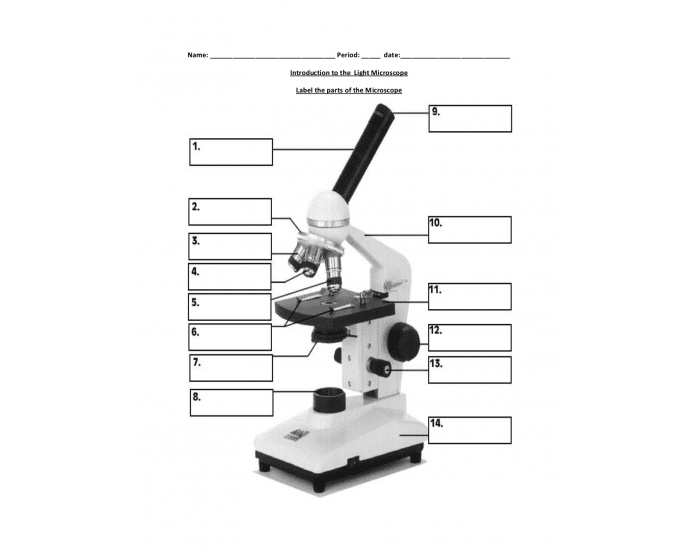 Label the parts of the Microscope - Printable