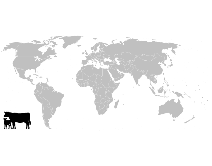 Top 10 Cattle Countries