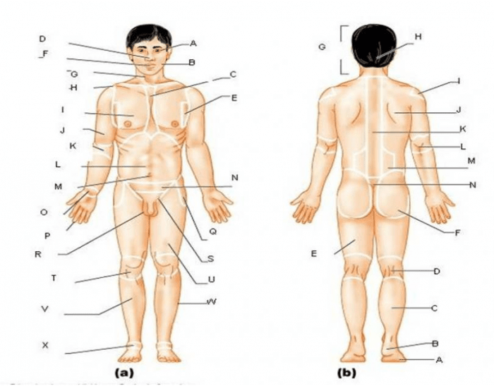 Anatomy Body Surface Landmarks