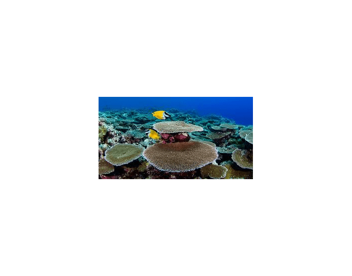 Coral Reef Vocabulary