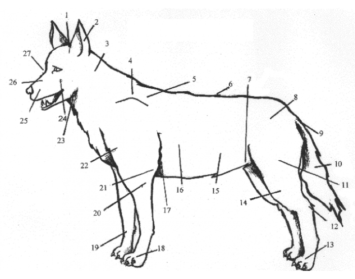 External Anatomical Terms Used For Dogs Purposegames