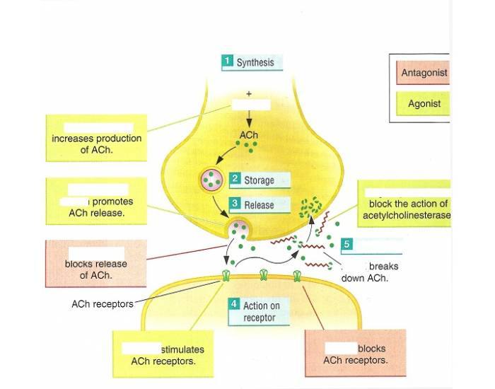 drug interactions on synapse essay Learn about lyrica (pregabalin) may treat, uses, dosage, side effects, drug interactions, warnings, patient labeling, reviews, and related medications.