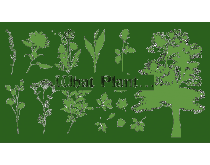 What Plant…