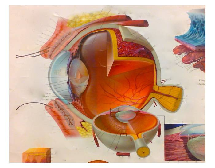 P5: Layers of the Eye