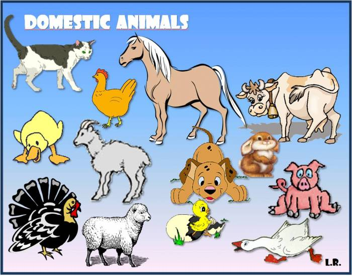 domestic animal essay White papers literature guides beyond the need to recognize and put an end to animal cruelty for the sake of the animal many domestic violence shelters have.