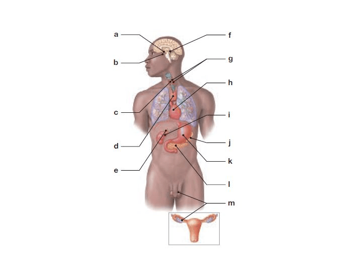 Endocrine Glands and Tissues