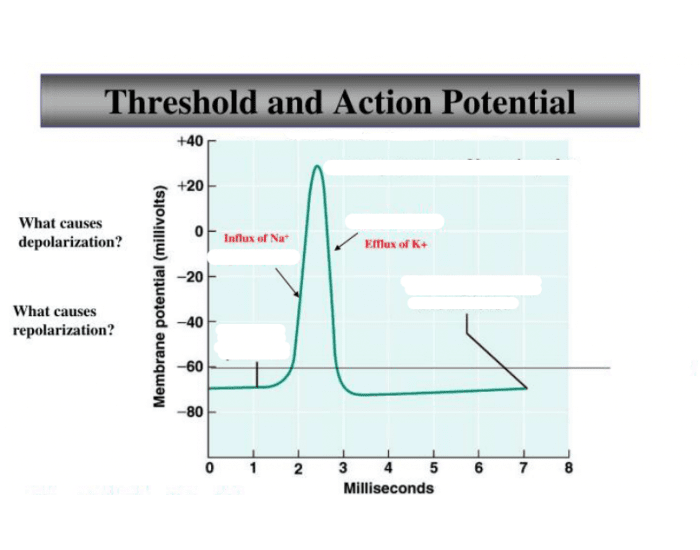 Threshold & Action Potential
