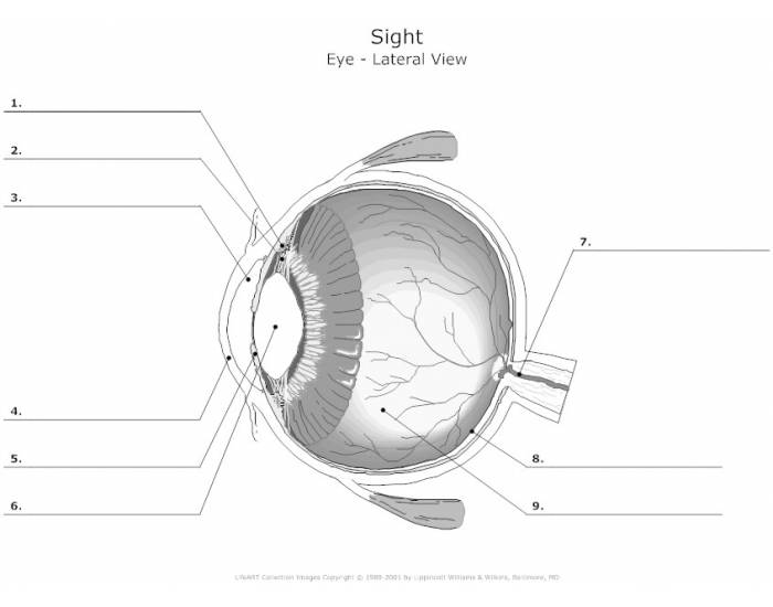 parts of the eye anatomy honors required purposegames. Black Bedroom Furniture Sets. Home Design Ideas
