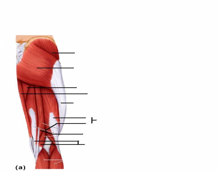 muscles crossing the hip and knee joints movements of the