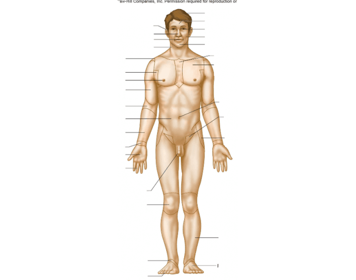 Anatomical Position Front Purposegames