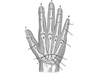 JOINTS OF HAND AND WRIST