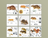 Rodents of Sweden (Rodentia)