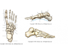 Chapter 7 Figures in Radiographic Positioning