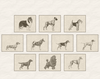 FCI Dog Breed Groups