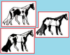 Paint Patterns of the Horse
