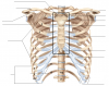 Axial Skeleton: Thorax and Sternum