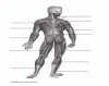 Posterior Muscles - SPED