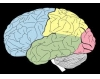 Brain Functions To Sections(One Word)