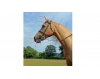 Name the parts of a horses head EASY - Dot Quiz