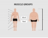 Muscles and Muscle Groups in the Human Body
