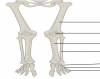 Leg bones (Mostly Lower)