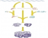 Central Dogma--Includes all types of RNA