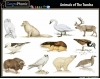 animals of different biomes