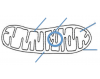 Bio 2.4 - Parts of a Mitochondrion