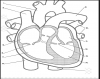 Name the parts of the heart