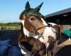 Parts of the horse bridle - DOT QUIZ - EASY