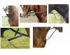 Types of horse Martingale - DOT QUIZ - EASY