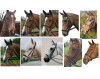 Can you name the types of noseband? - DOT QUIZ