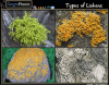 Types of growth Forms for  Lichens