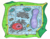PHMS Plant Cell 4